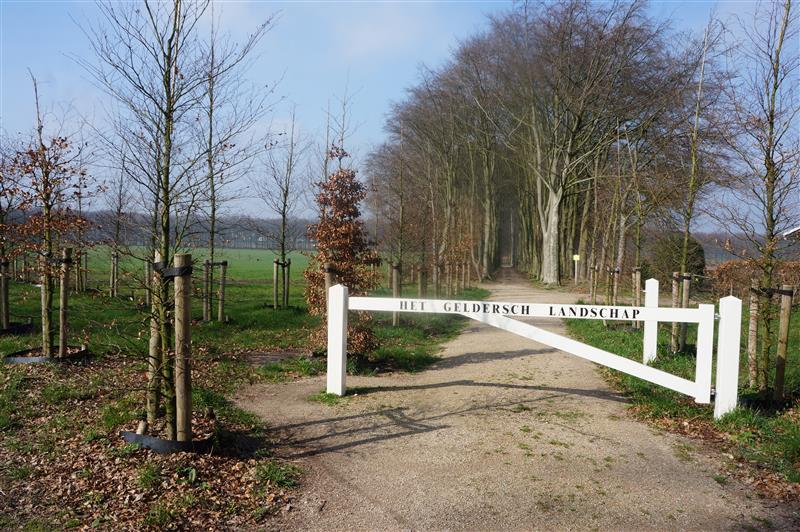 Schelmseweg